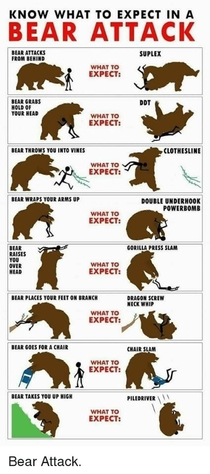 Know What to Expect in a Bear Attack