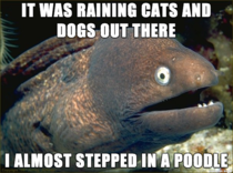 Lame joke eel