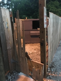 Latch put on gate to stop dumpster diving bearBear not amused