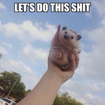 Let the enthusiastic hedgehog motivate you to be productive