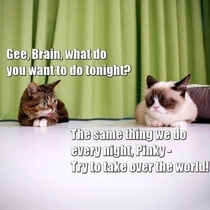 Lil BUB and Tardar Sauce as Pinky amp the Brain