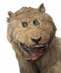 Lion stuffed in  by someone who never saw a live one