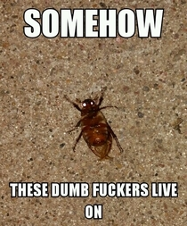 Living in the Midwest I sometimes ponder the majestic species that are endangered in the world and then a June bug thuds into a window behind me