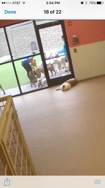 Logged into my dogs daycare webcam I guess he felt to lazy to go outside