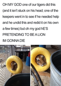 Look at me I am lion now