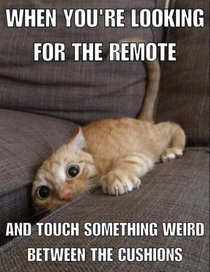 Looking for the remote