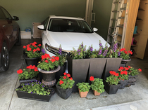 Looks like a wake for my car after my wife moved the flowers into the garage to protect them from a freeze