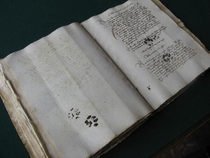 Looks like cats have always given exactly zero shtsthis is an Italian manuscript from the year