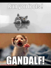LOTR cats edition