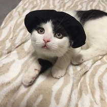 Made a little matador hat for our kitten Millie So catador