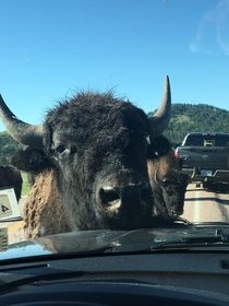 Made a new friend while driving in the Black Hills of South Dakota