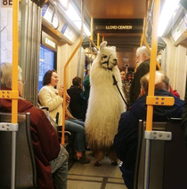 Man brings a llama into the train in Portland