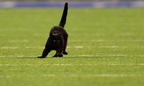 Monday night Giants-Cowboys game delayed by black cat