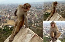 Monkey posing like every girl on instagram