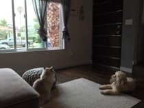 My animals watching their favorite movie called The Open Window