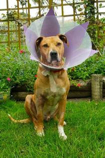 My best bud got a cone of shame so my sister and girlfriend turned him into a flower
