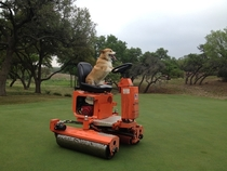 My brother works on a golf course and brings his corgi to work everyday He sent me this today