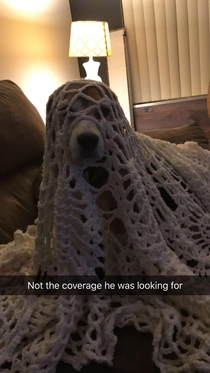 My brothers dog likes to be covered by a blanket threw this blanket on him but it wasnt cutting it