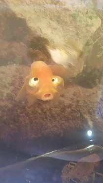 My brothers fish bubbles