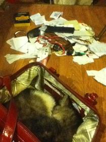 My cat decided to clear out my gfs purse and sleep in it