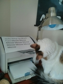 My cat is obsessed with the printer so I send her messages during the day