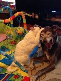 My cat Maui told my dog Buster a funny joke Feel free to caption