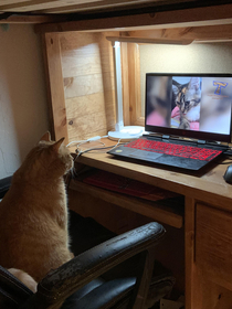 My cat sitting in my sons room watching cat videos