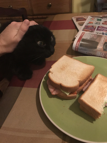 My cat trying desperately to get my sandwich