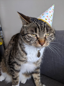 My cat turned  she was not impressed with the celebrations