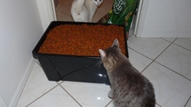 My cat was awe-struck at the amount of food before him