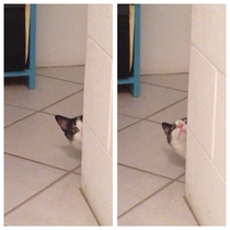 My cat when it realised why i was sitting on the toilet