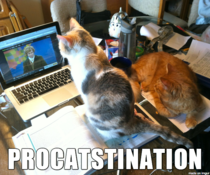 My cats are procrastination enablers