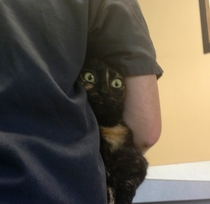 My cats face when the vet took her temperature