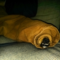 My chihuahua likes to keep warm in my jacket sleeve