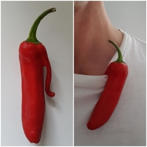 My chilli came with a handy clip so that it can be worn with elegance