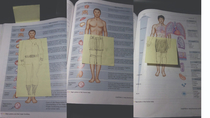 My cousin felt she had to make her naked anatomy images in her book suitable for work when she read them there
