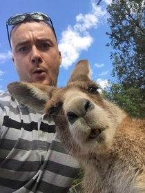 My cousin wanted a selfie with a kangaroo