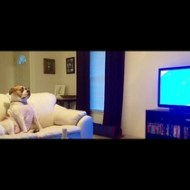My cousins dog watching shark week