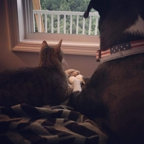 My dog and cat comforting each other during a thunderstorm