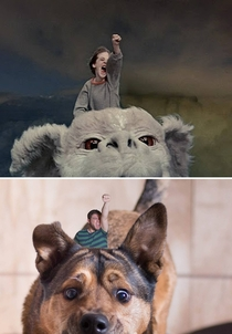 My dog and I recreated a scene from The Neverending Story