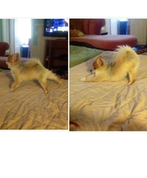 My dog does these two yoga stretches every morning he holds both positions for like  seconds