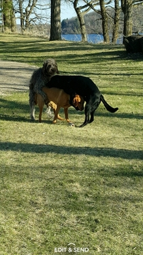 My dog getting Eiffel Towered at the park yesterday