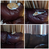 My dog is slowly sinking into the couch abyss