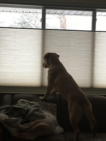 My dog recently lost her eyesight but still runs to the window whenever she hears that snowplow