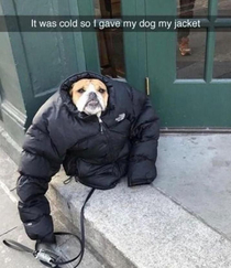 My dog was cold i gave him my jacket