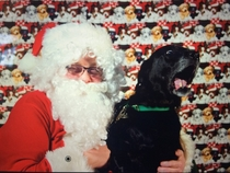 My dog wasnt a fan of Santa