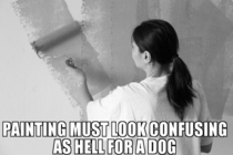 My dog watched me repaint a room today This thought occurred to me