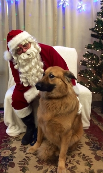 My dogs reaction to Santa photos last Christmas was priceless