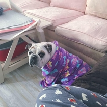 My English Bulldog really loves clothing so we bought her a childrens size bathrobe