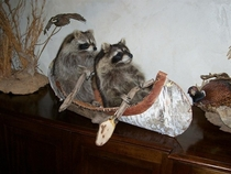 My favorite taxidermy